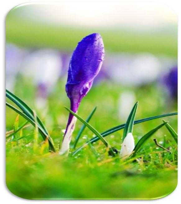 Frühjahr – die beste Zeit zur Regeneration der Leber und Entgiftung